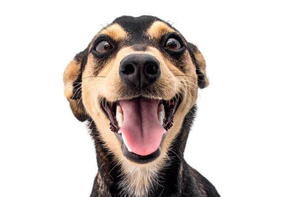 Ao todo, 40 animais poderão ganhar um novo lar. Foto: Reprodução/ Internet