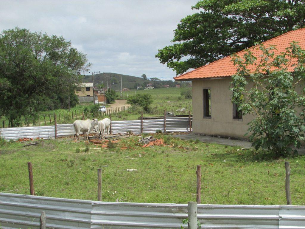 Área segue abandona e é invadida por gado