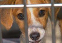 Cães estão disponíveis no Canil em Tamoios, gatos estão em lares temporários.