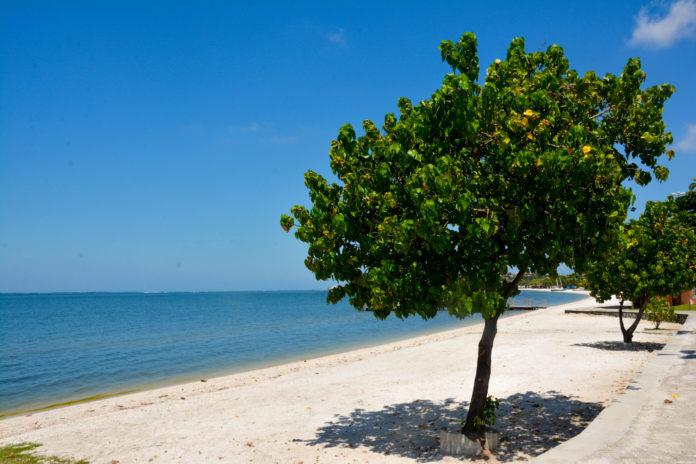Iguaba realiza plantio de árvores na Lagoa de Araruama nesta segunda