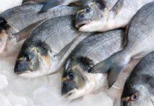 Araruama promove Feirão do Peixe a partir desta quinta