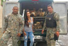 Cães foram resgatados após denúncias de maus tratos.
