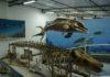 Instituto de Estudos do Mar comemora aniversário com entrada gratuita e exposições