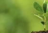 Objetivo é promover a conscientização ambiental dos alunos. Foto: Internet/Reprodução