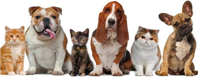 Feira é uma parceria com o Bazar Animal. Foto: Reprodução/Internet