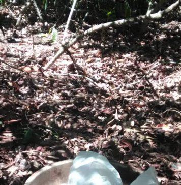Segundo a PM, foram apreendidos 492 pinos do entorpecente. Foto: PM/Divulgação
