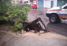 Ocorrências envolvem queda de árvores, rachaduras em paredes e alagamentos. Foto: Defesa Civil CF