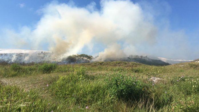 Provocar incêndios nesses locais é crime ambiental. Foto: Prefeitura de Cabo Frio/Divulgação