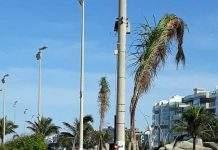A Prefeitura de Cabo Frio iniciou nesta terça-feira (18), o plantio de 30 árvores na orla da Praia do Forte.